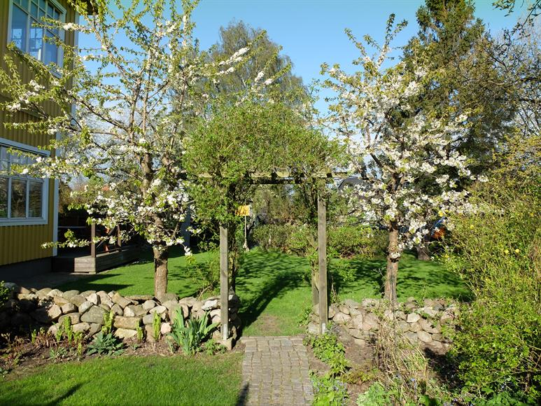 Liten stenmur och vacker rosenbuske som växer över pergolan, körsbärsträd på var sida. Finns möjlighet till odling av potatis eller liknande.