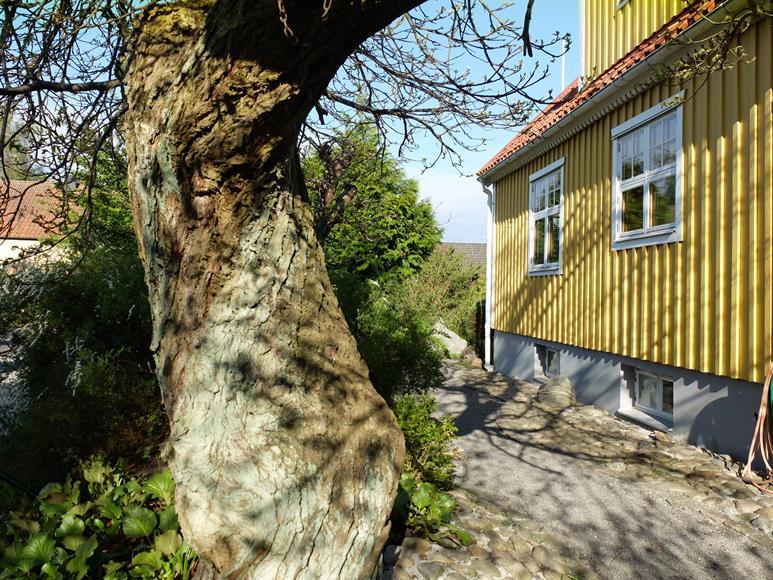 Framsidan av huset med en äkta ätbar kastanj. Carport till huset finns.